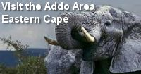 Addo Area Eastern Cape